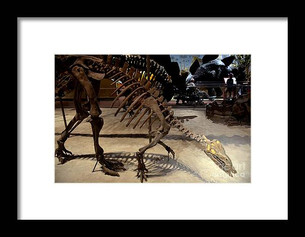Dinosaurs Framed Print featuring the digital art Dinosaurs by Pravine Chester