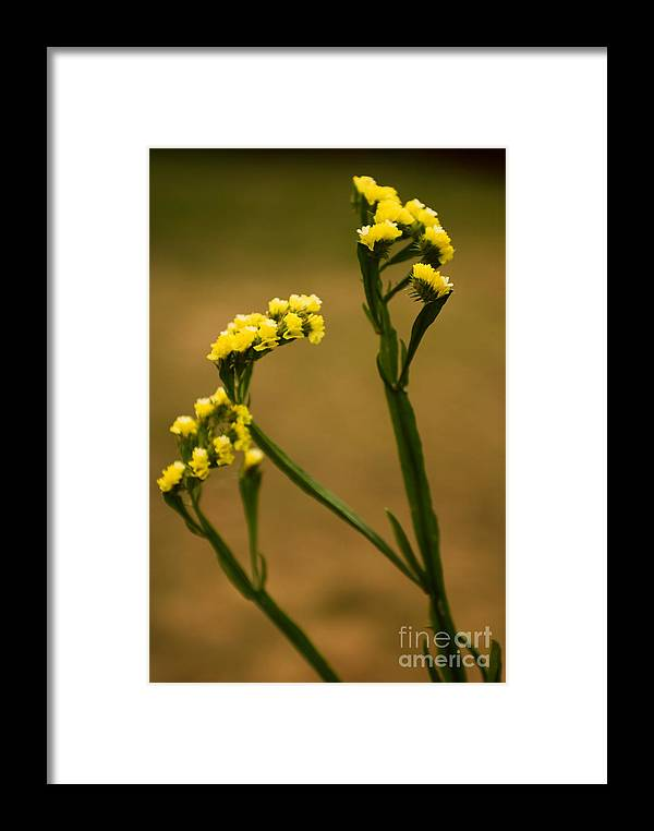 Flower Framed Print featuring the photograph Distinctive Look by Syed Aqueel