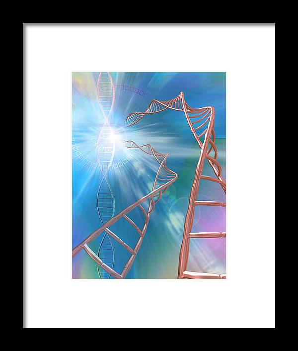 Double Helix Framed Print featuring the photograph Dna Helices by Pasieka