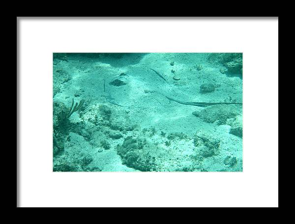 Stingray Framed Print featuring the photograph Do You See What I See? by Kimberly Perry