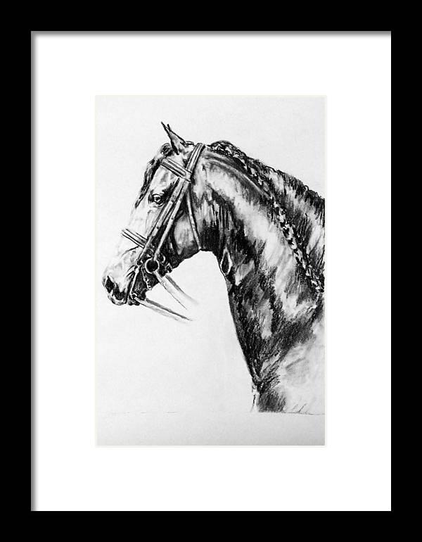 Horse Friesian Framed Print featuring the drawing Doaitsen by Jennifer Vanderploeg