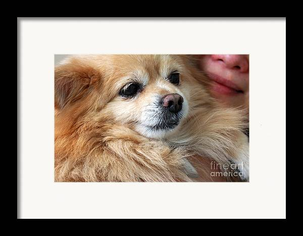 Dog Framed Print featuring the photograph Dog First by Charline Xia