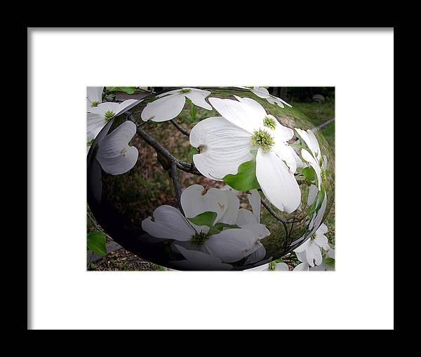 Dogwood Framed Print featuring the photograph Dogwood Under Glass by Pamela Hyde Wilson