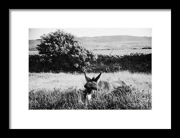 Europe Framed Print featuring the photograph Donkey In The West Of Ireland by Joe Fox