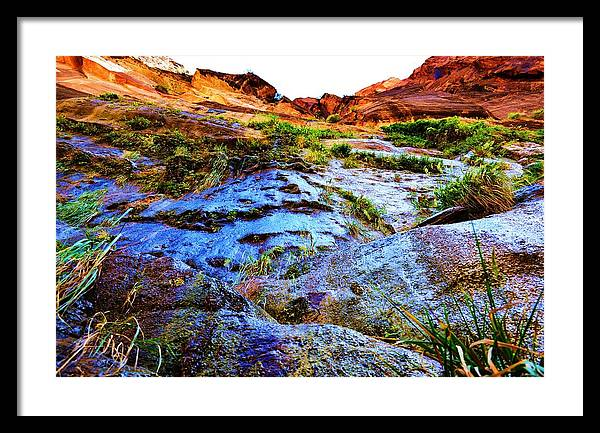 Don't Forget To Look Up Framed Print featuring the photograph Don't Forget To Look Up by Paulette Hawkins
