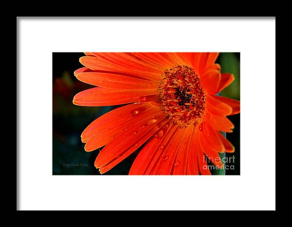 Daisy Framed Print featuring the photograph Don't Make Me Cry...... by Tanya Tanski