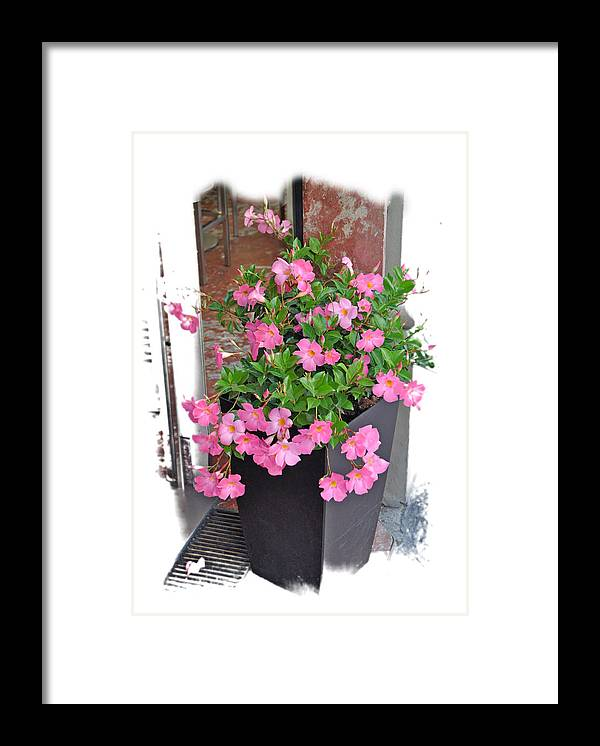 Flowers Framed Print featuring the photograph Doorway Flowers by Allan Rothman