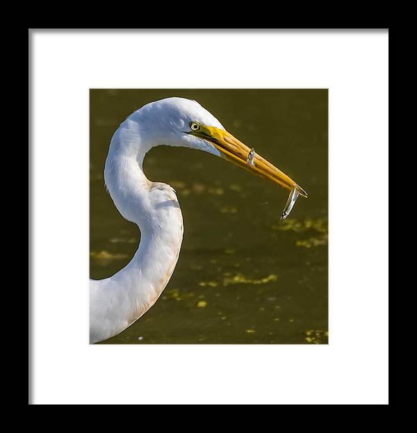 Framed Print featuring the photograph Double The Fun by Brian Stevens