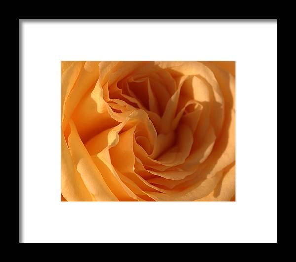 Yellow Framed Print featuring the photograph Double Yellow Rose by Katherine Morgan
