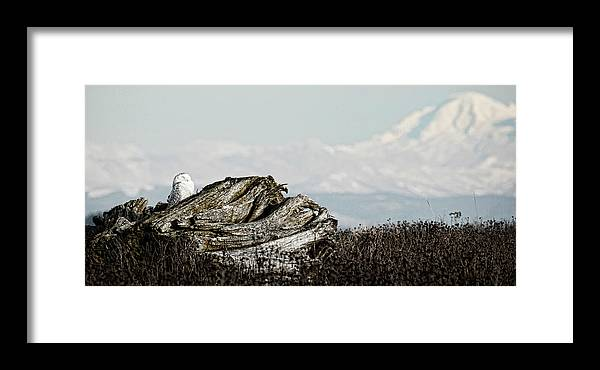Owl Framed Print featuring the photograph Dozing With Mount Baker by Karen Ulvestad