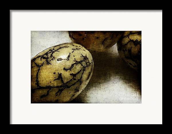Dragon Framed Print featuring the photograph Dragon Eggs by Judi Bagwell