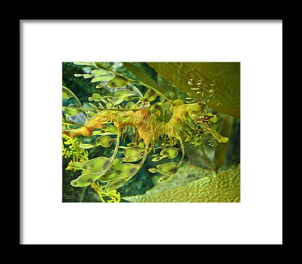 Seahorse Framed Print featuring the photograph Dragon Seahorse by Diego Re