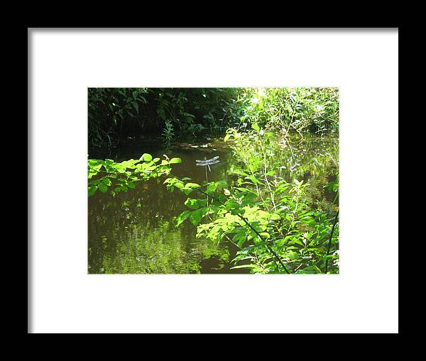Dragonfly Framed Print featuring the photograph Dragonfly In Flight by Dan Callahan