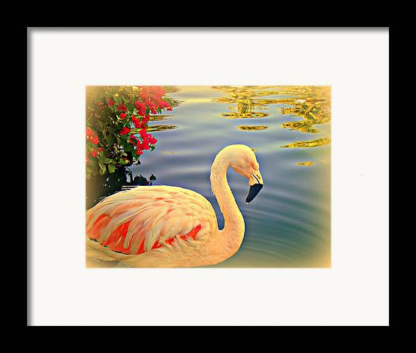 Flamingos Framed Print featuring the photograph Dreamy Flamingo by Kevin Moore