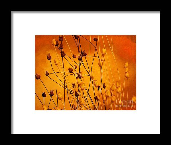 Photo Framed Print featuring the photograph Dried Beautiful by Marsha Heiken