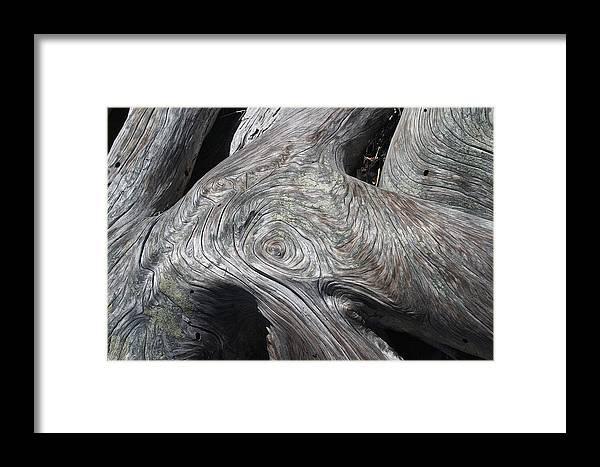Sunlight Framed Print featuring the photograph Driftwood Ridges 5 by David Kleinsasser