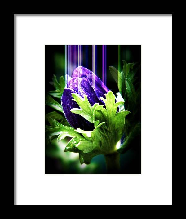 Flower Framed Print featuring the photograph Drip The Flower by Amanda Eberly-Kudamik