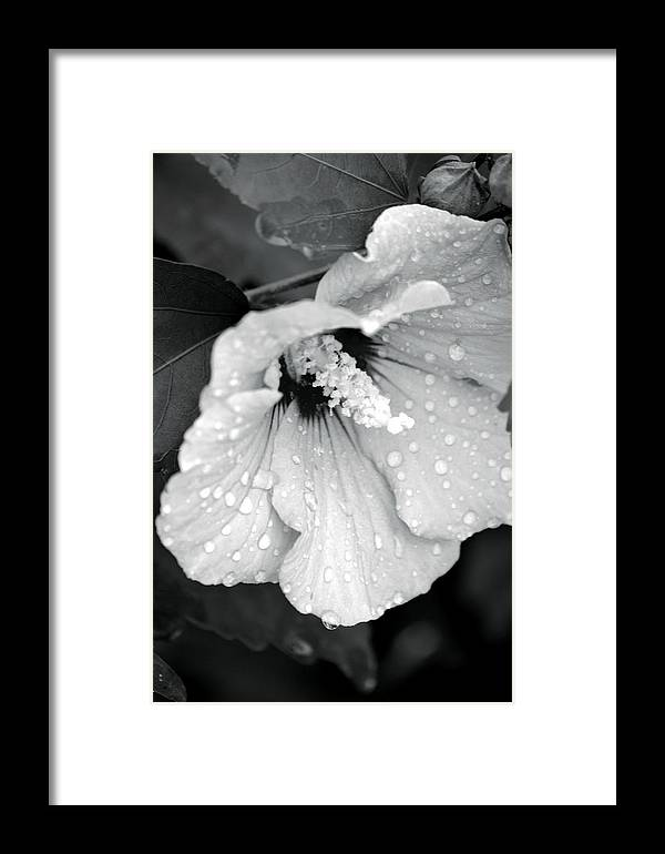 Droplets Framed Print featuring the photograph Droplets by Maria Urso