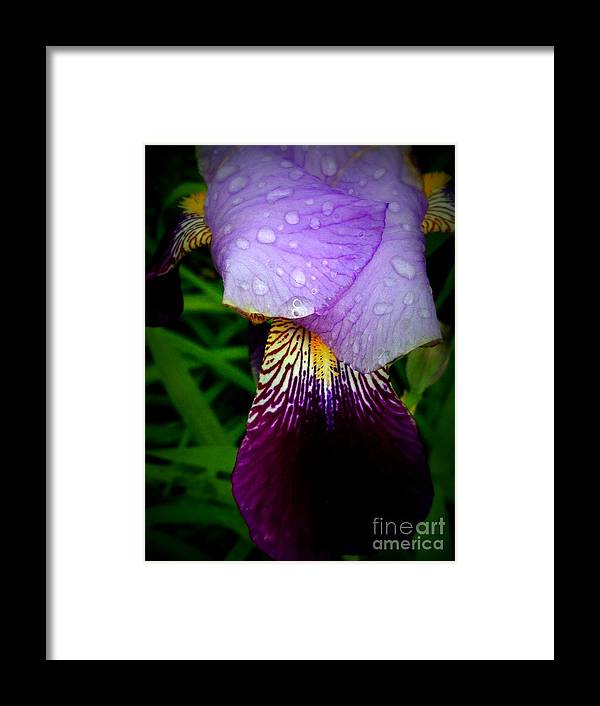 Purple Framed Print featuring the photograph Droplets On Flower by Deborah Selib-Haig DMacq