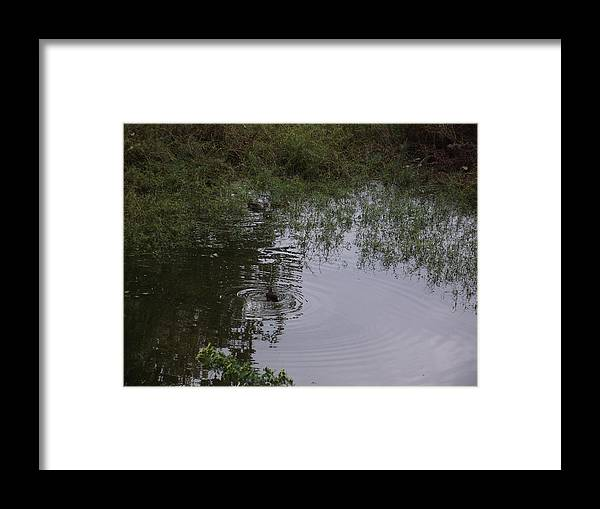 Duck Framed Print featuring the photograph Duck In A Pond by Rani De Leeuw