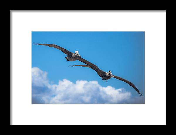 Pelican Framed Print featuring the photograph Duet by Ralf Kaiser