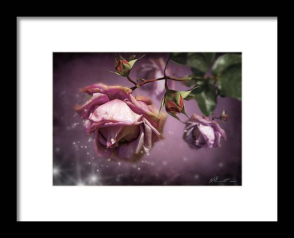 Anniversary Framed Print featuring the digital art Dusky Pink Roses by Svetlana Sewell