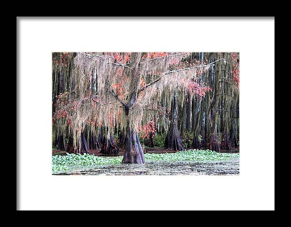 None Framed Print featuring the photograph East Texas by Ross Odom