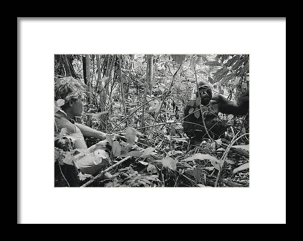Outdoors Framed Print featuring the photograph Ebobo, A Male Gorilla, Waits by Michael Nichols