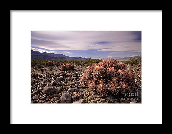 Cactus Framed Print featuring the photograph Echinocactus Row by Katja Zuske
