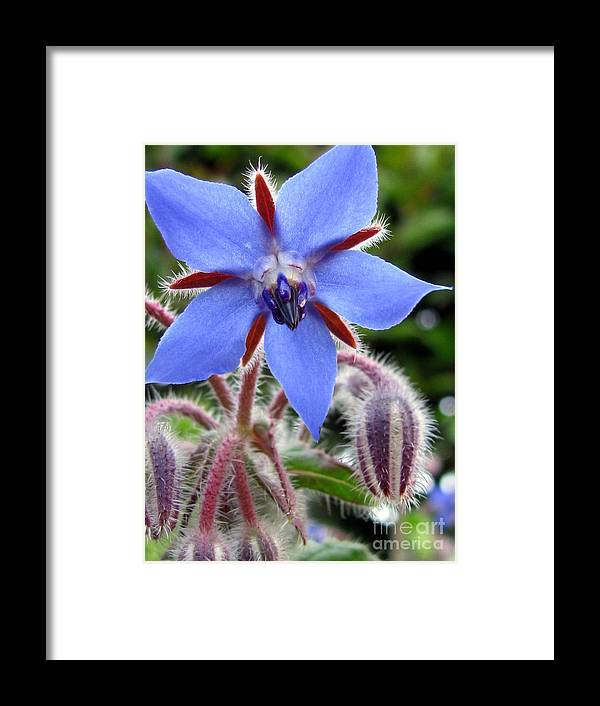 Flower Framed Print featuring the photograph Edible Flower Photography by Tina Marie