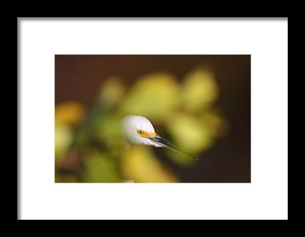 Egret Framed Print featuring the photograph Egret Abstract by Bruce J Robinson