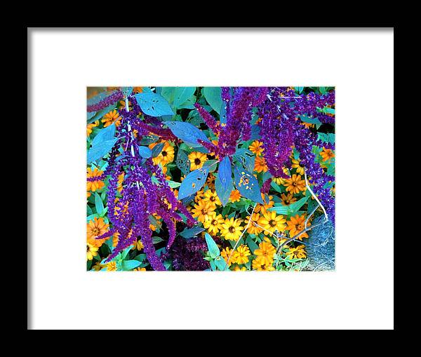 Brookside Gardens Framed Print featuring the photograph Egyptian Starcluster Love-in A Puff by Mpagijk Mpagijk