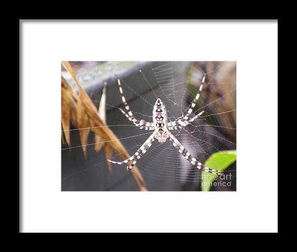 Macro Framed Print featuring the photograph Eight Legged Friend by Bobby Hammerstone