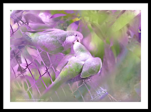El Beso Framed Print featuring the photograph El Beso by Alfonso Garcia