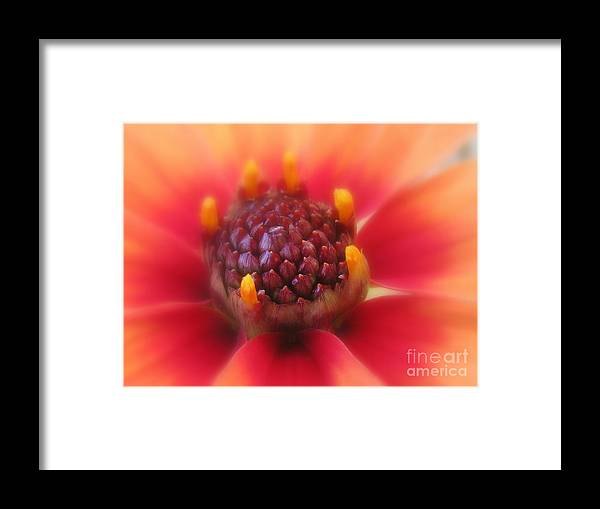 Flower Framed Print featuring the photograph Electric by Tina Marie