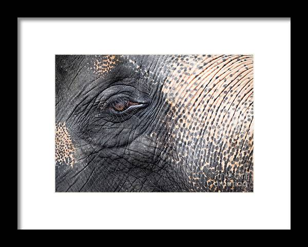 African Framed Print featuring the photograph Elephant close-up portrait by Johan Larson