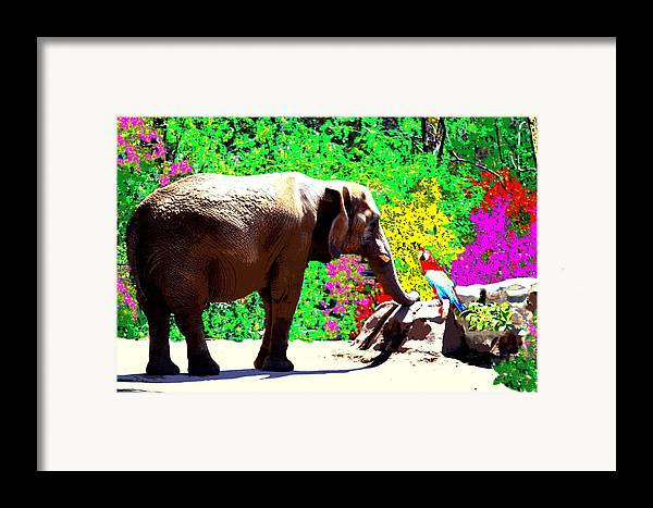 Elephant Framed Print featuring the photograph Elephant-parrot Dialogue by Rom Galicia