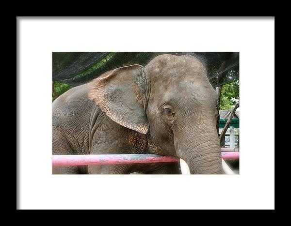 Elephant Framed Print featuring the photograph Elephant by Robin Regan