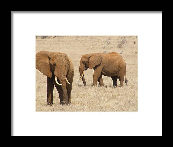 Animal Framed Print featuring the photograph Elephants by Ellie Coombes