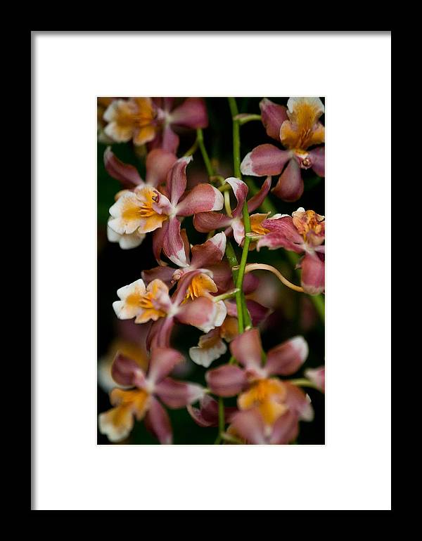 Flower Framed Print featuring the photograph Emma's Orchid by Trish Tritz