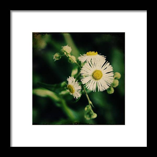 Flower Photographs Framed Print featuring the photograph Enraptured by Candy Roberts