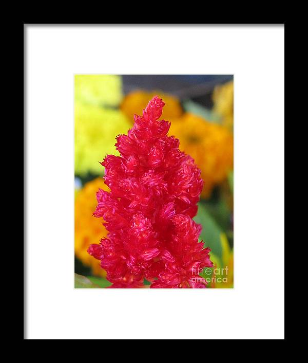 Flower Framed Print featuring the photograph Enterprising by Tina Marie