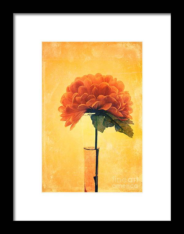 Still Life Framed Print featuring the photograph Estillo - 01i2t03 by Variance Collections