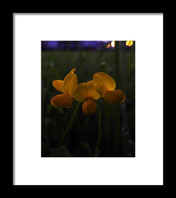Nature Framed Print featuring the photograph Evening Glow by Frank Blakely