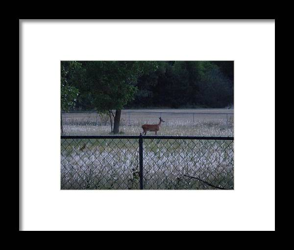 Landscapes Framed Print featuring the photograph Evening Meal by Aaron Moore