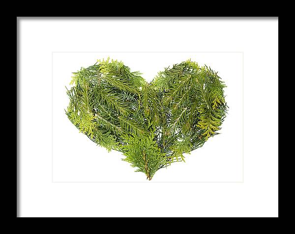 Heart Framed Print featuring the photograph Evergreen Coniferous Christmas Trees Heart Isolated by Aleksandr Volkov