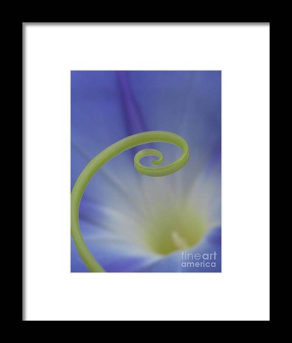 Flower Framed Print featuring the photograph Everlasting Photography by Tina Marie