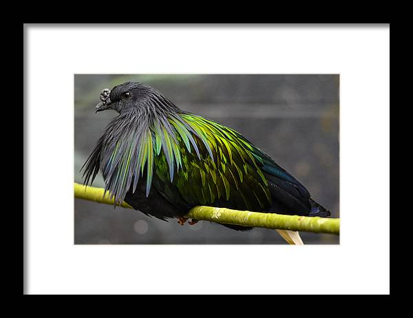 Framed Print featuring the photograph Exotic by Brian Stevens