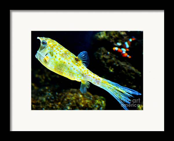 Fish Framed Print featuring the photograph Exotic Fish by Pravine Chester