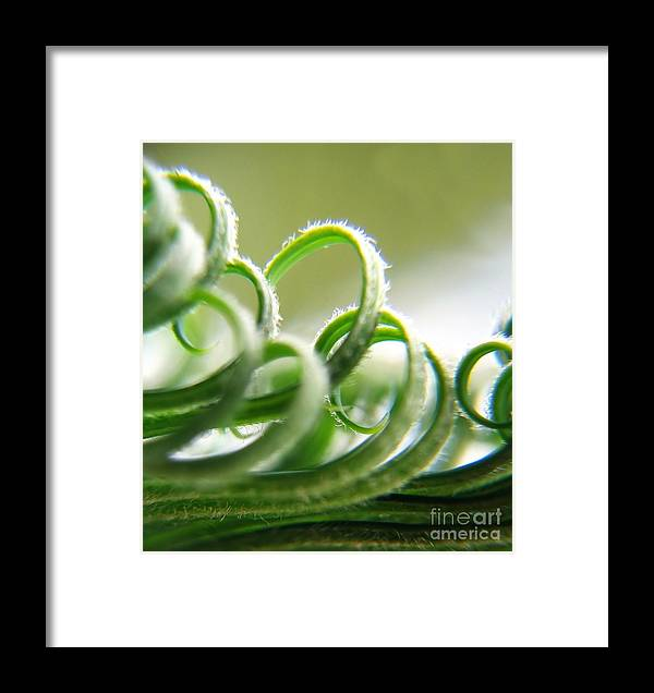 Lush Framed Print featuring the photograph Exotic Flower by Yali Shi
